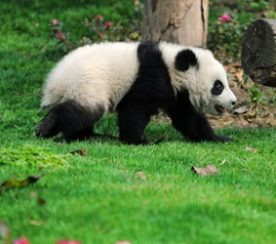 Quit Blaming Your Suck on Panda