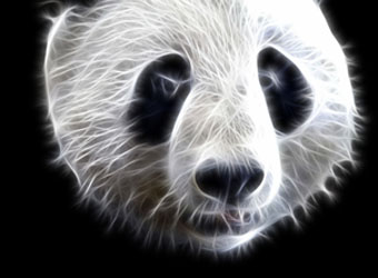 Are You Making These 7 Panda-Punishing Content Mistakes?