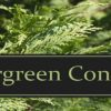 What is Evergreen Content and Why Should You Care?