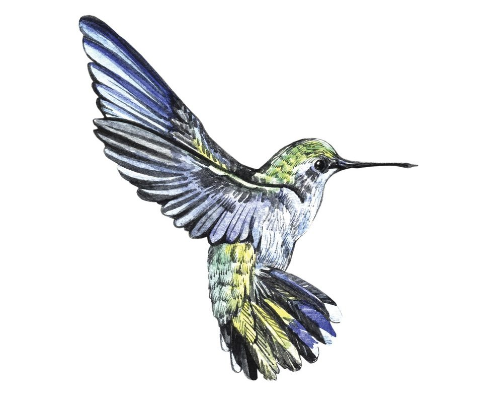 Google Hummingbird & What it Means for Online Marketers & SEO