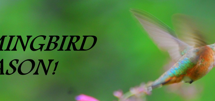 What Google Hummingbird Means for Your Content Strategy