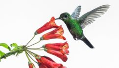 Google-Hummingbird-Content-Marketing-Feature-Image