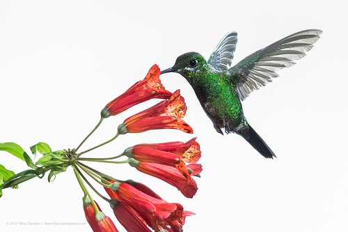 Google Hummingbird Friendly Content Marketing Tips