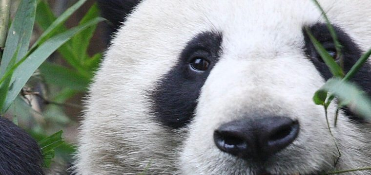 New Panda Update Rolling Out, Google Takes Another Stand Against Thin Content