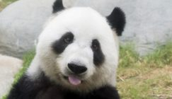 Google Rolls Out Panda 4.0 & Payday Loan 2.0 Updates