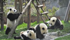 what the experts say about panda 4.0 and other google updates