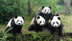 'What The Experts Say': What's Changed After Panda 4.0?