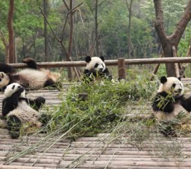 Everything You Need to Know about Panda 4.0