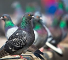8 Hacks for Pigeon-Proof Reputation Management