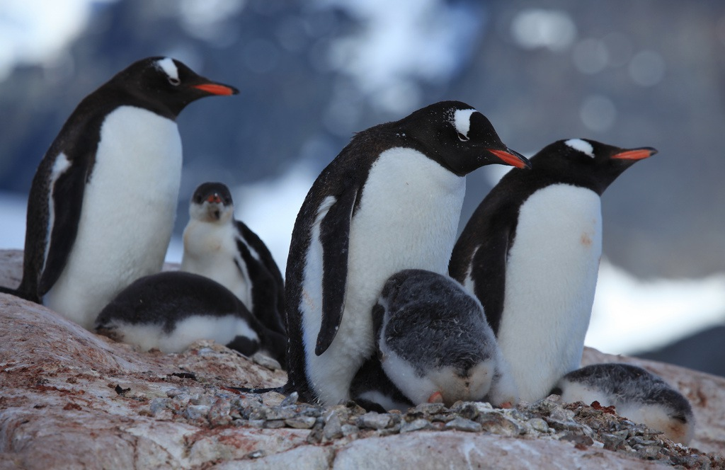 Penguin 3.0 A Refresh Affecting 1% of English Queries, Google Confirms