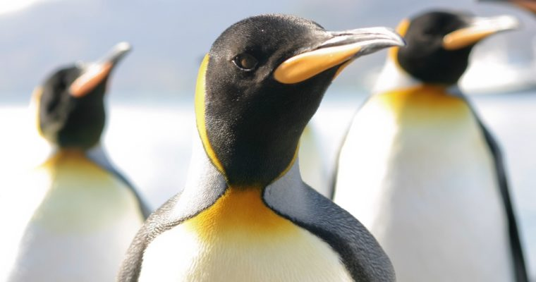 Don't Get in a Flap: Your Penguin 3.0 Survival Guide