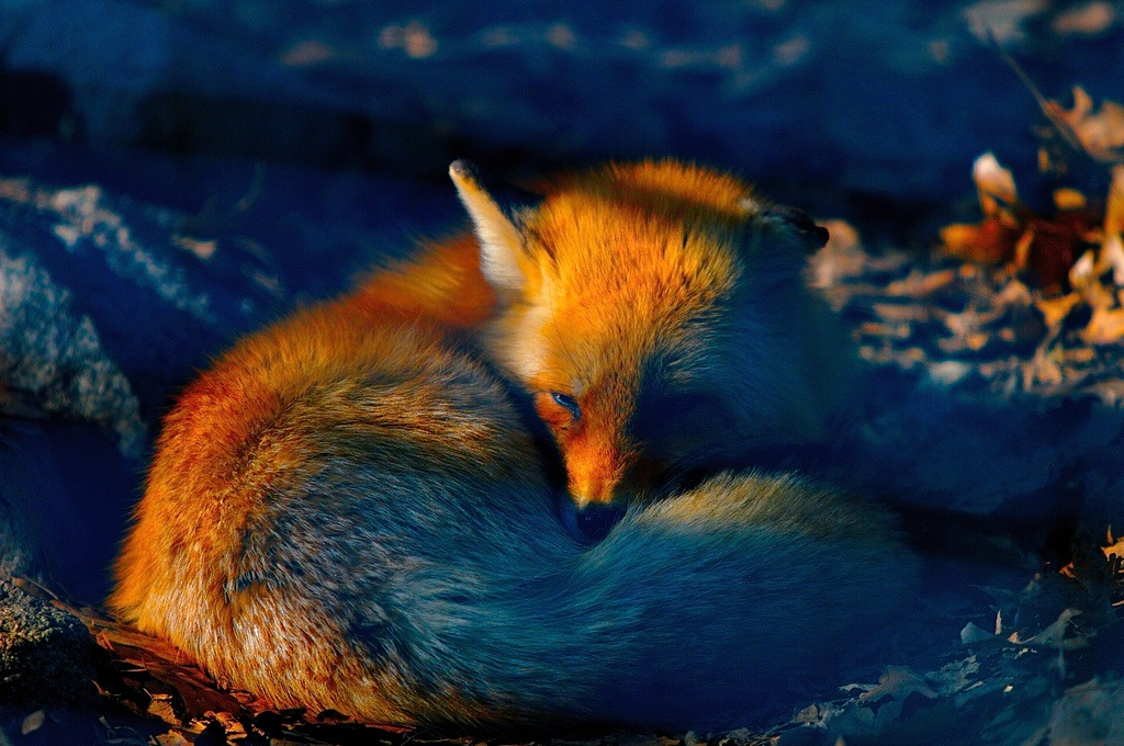 Firefox 34 Released Today With Improved Search Bar, Yahoo As Default Search Engine