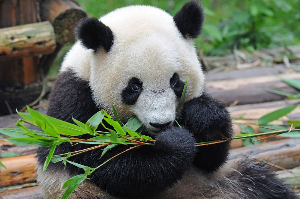 Content strategy tips to beat panda and penguin sej