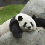 Google Panda 4.2 Out Now, Affects 2-3% of Queries | SEJ