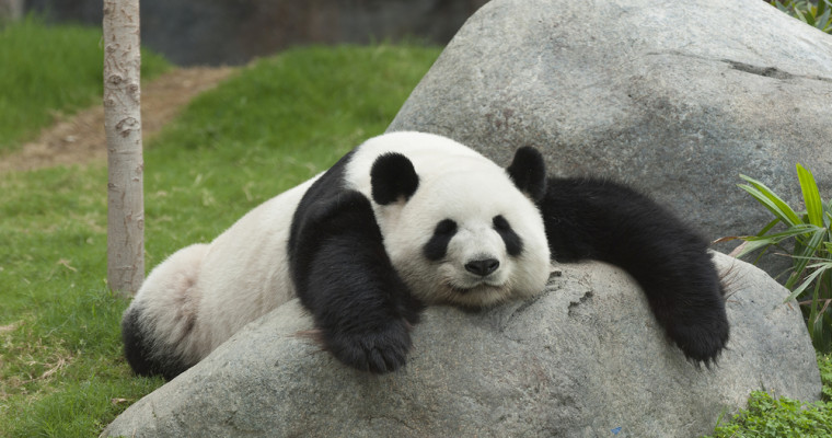Google Panda 4.2 Rolling Out Now, Affecting 2-3% of Queries