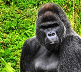 Why Facebook is the 800-Pound Gorilla of Livestreaming