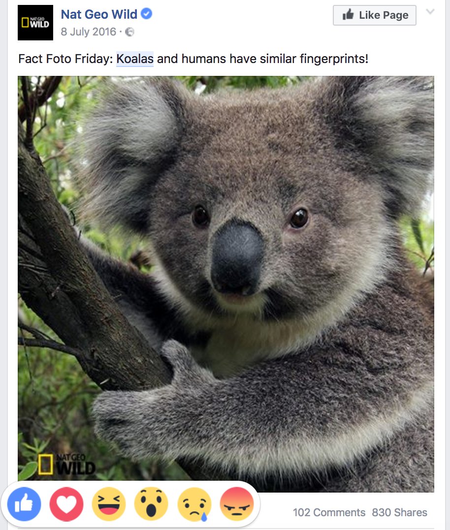 Koalas - Facebook Reactions