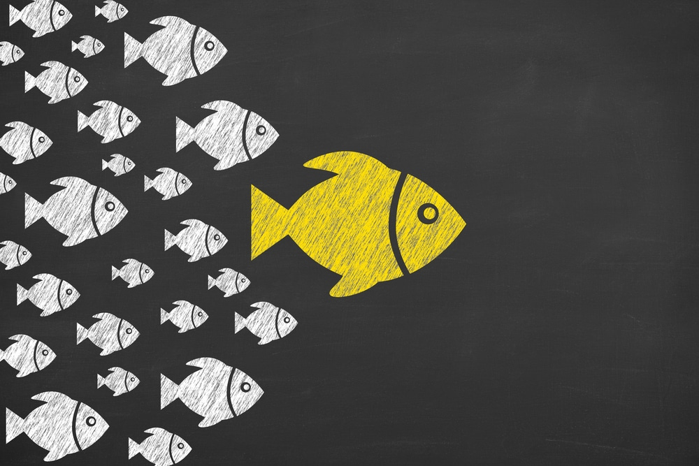 Small white fish following a big yellow fish to demonstrate the concept of an influencer