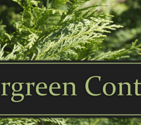 10 Awesome Evergreen Content Ideas for E-Commerce Websites
