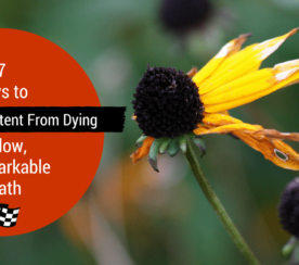 7 Ways to Keep Great Content from Dying a Slow, Unremarkable Death