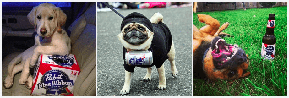 Pabst Blue Ribbon dogs