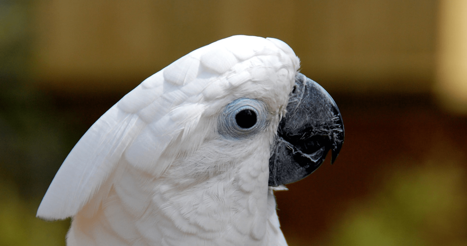 5 Content Marketing Lessons from YouTube's Most Famous Cockatoos