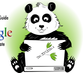 A Complete Guide to the Google Panda Update