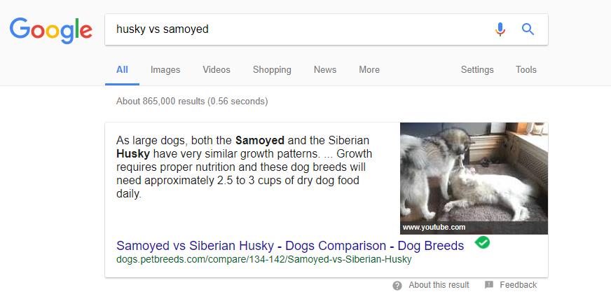 husky vs samoyed search results