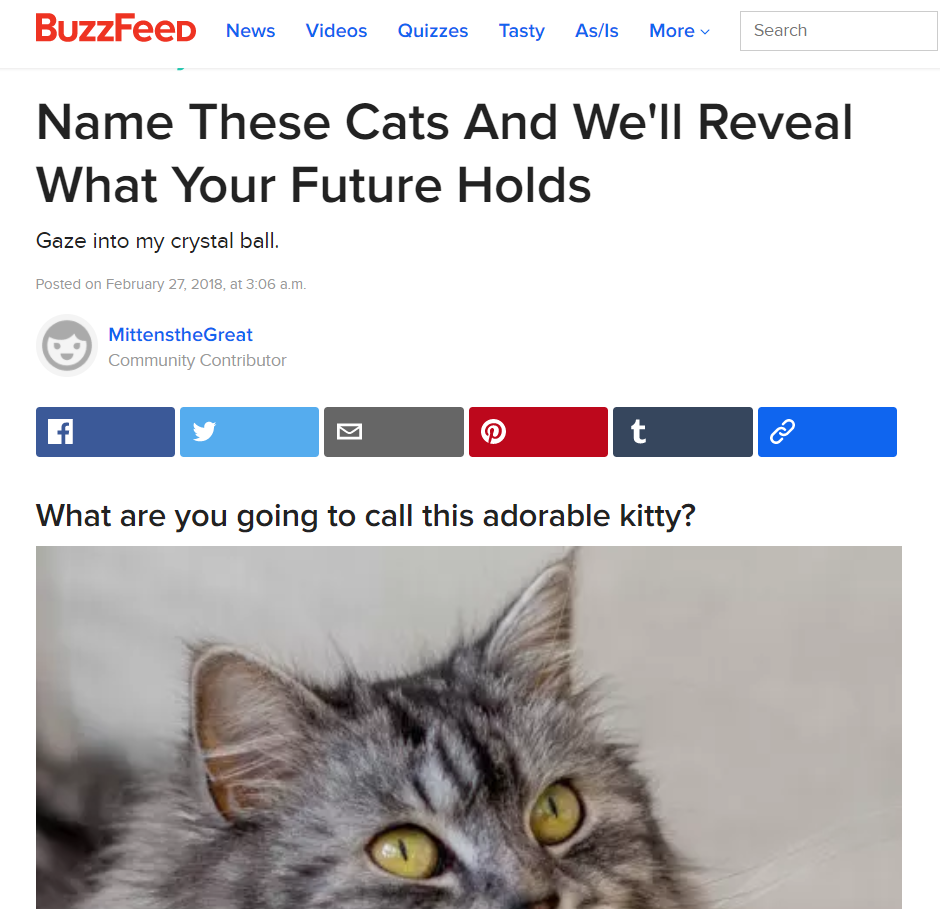 BuzzFeed Name These Cats And We'll Reveal What Your Future Holds