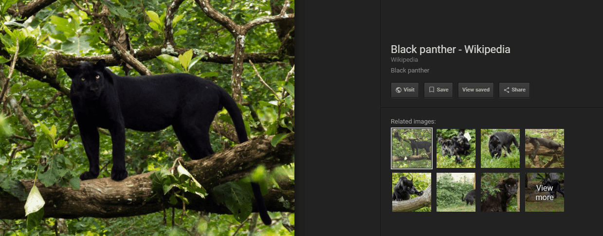 new image search options