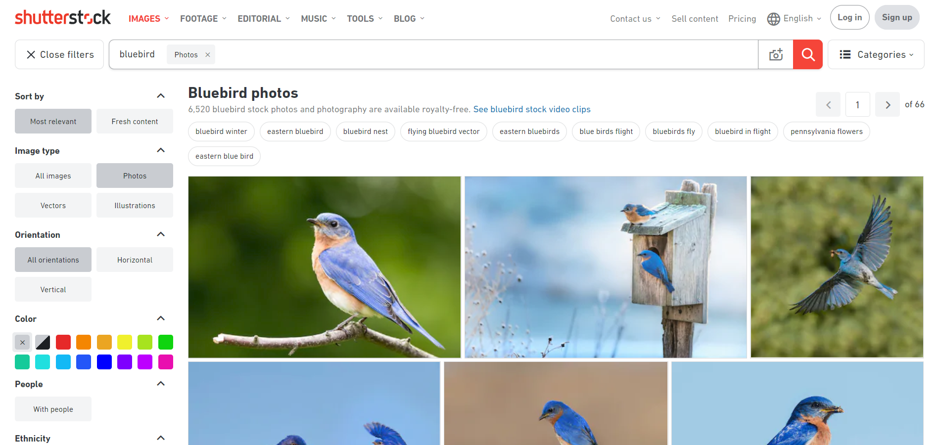 The 10 Best Image Search Engines