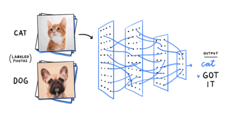 How a machine learning model words: categorizing cat and dog photos