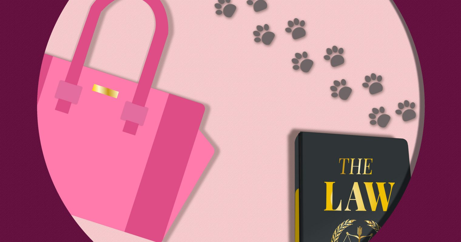 New Google Easter Egg For 20th Anniversary of Legally Blonde