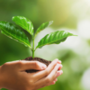 Google Rolls Out New Eco-Friendly Search Filters